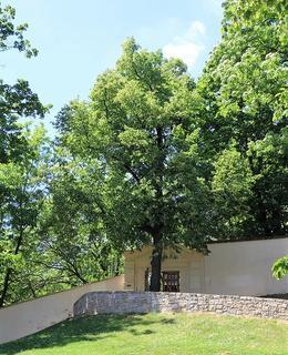Mariina lípa, Havlíčkovy sady, Vinohrady