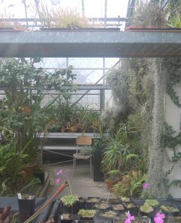 Veřejnosti nepřístupný skleník v severozápadní části zahrady, foto D. Broncová