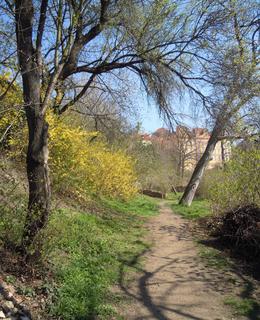 Pěšina na Albertovském svahu (foto D. Broncová)