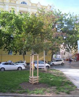 V parku byly vysazenyy nové dřeviny (foto D. Broncová)