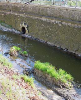 Vegetační opevnění z různých rostlin bylo vysázeno na dně potoka (foto D. Broncová)