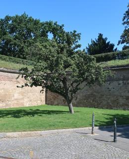 V těchto místech stával domeček z 19. století (Foto M. Polák)