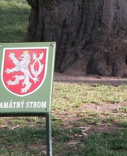 U stromu je tabulka Památný strom. Foto Milan Polák