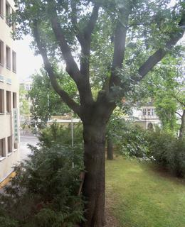 Větvení stromu. Foto D. Broncová