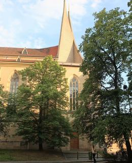 Lípy u kostela. Foto M. Polák, červen 2020