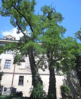 Jižní strana klášterní zahrady, foto D. Broncová, červenec 2020