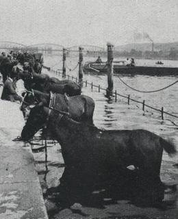 Plavení koní pod nynějším Rašínovým nábřeží (archiv Milpo)