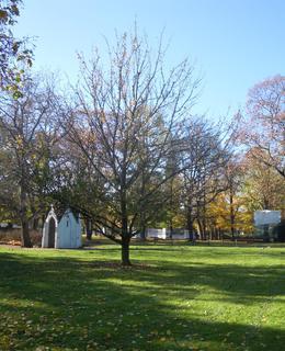 Karlachovy sady se stromem tisíciletí (foto D. Broncová, listopad 2020)