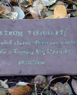 U paty stromu je nová tabulka s textem (foto D. Broncová, listopad 2020)