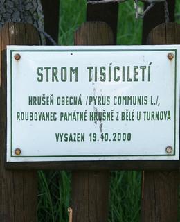 Původní cedulka byla umístěna na dřevěném plůtku (foto Milan Polák, r. 2007)