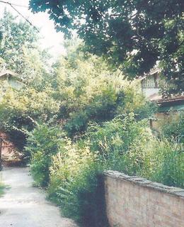 Na konci 20. století bylo místo zarostlé náletovými dřevinami. Archiv Milpo