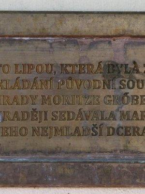 Mariina lípa, Havlíčkovy sady, Vinohrady (autor fotografie: Milan Polák)