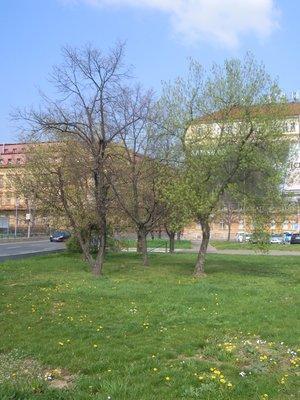 Karlovské předmostí (autor fotografie: Dagmar Broncová)