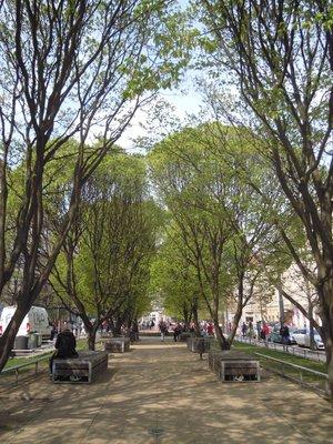 Habry na Tylově náměstí (autor fotografie: Dagmar Broncová)